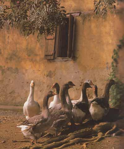 comment cuisiner le foie gras recettes d 39 hubert. Black Bedroom Furniture Sets. Home Design Ideas