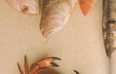 poissons-001-w