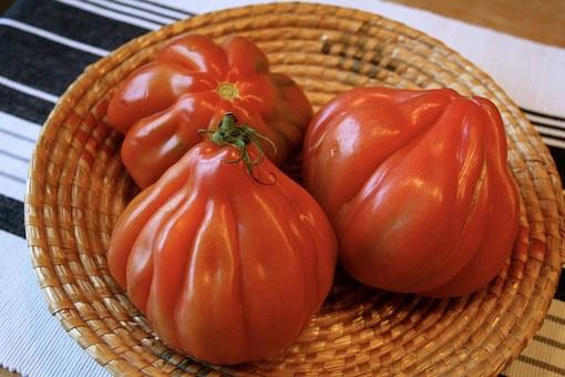 Les tomates suite recettes d 39 hubert - Quand repiquer les tomates en pleine terre ...