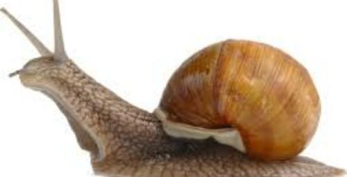 escargot.pic