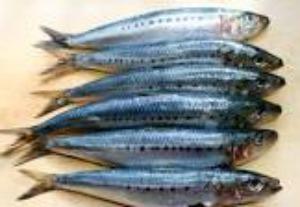 sardine 2.pic